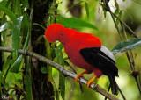 Oiseaux de l'Équateur 2015 Ecuador birds