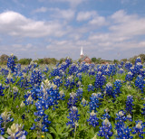Texas wildflower season 2014