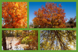 A collage of Fall color