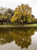 Autumn across the creek. Round Rock Texas