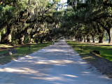 -Charleston SC. Boone Hall Plantation