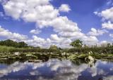 Life on the frog pond