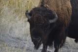 United States National Bison Refuge