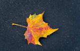 Fallen leaf & Autumn rain.