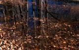 Autumnal colours.