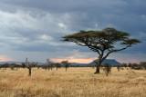 Serengeti Evening
