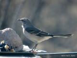 Backyard Birding in Arizona