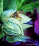 Wasp Happening?