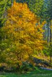 Herbst 2015 (3)
