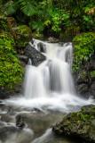 Rain forest II