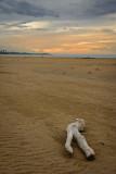 Shore debris