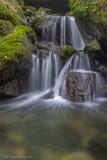 Rain Forest cascade