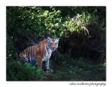 Corbett National Park, INDIA, 2016