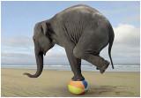 balance-elephant.jpg