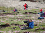 Everybody photographing puffins