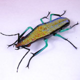 Jewel Beetle Size: 2.33  Price: SOLD