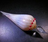 Shellacious  Size: 1.79 x 6.53  Price: SOLD