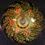 Fractal Harvest Size: 1.99 Price: SOLD