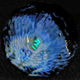 Fractal Bluebell Size: 1.86 Price: SOLD