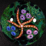 Pacific Starfish  Size: 2.26  Price: SOLD