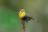Birds of Sikkim