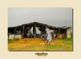 Rajasthan - INDIA 2013