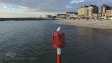 Brave Seagull - Margate Seafront