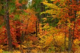 5477-Forest-Color-Explosion.jpg
