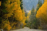 5087-Road-of-Gold.jpg