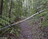 Goat Creek Tail