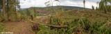 Logging_Panorama2a.jpg