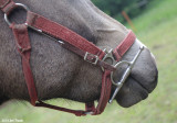 Full cheek snaffle attached to halter