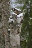 Idaho Woods