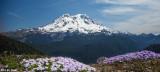 Mt Rainier from Glacier View