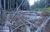 Clear Fork Log Jamb