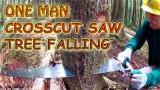 Tree Falling Video