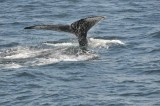 Cape Ann Whale Watch, '13