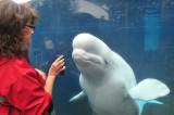 Mystic Aquarium '14