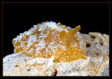 2 long unidentified nudibranch