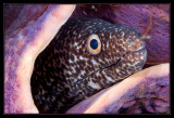 ted Moray Eel and Purple Tube Sponge