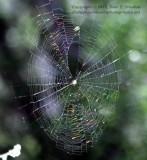 The Web - IMG_9014.JPG