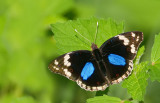 Butterflies and Moths of Africa / Dag en Nachtvlinders van Afrika