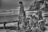 Drift wood and sea weed