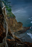 Tree trunk and cliff
