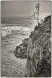 Cliff side tree