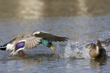 flying_birds
