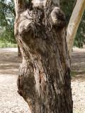 tree_1080673w.jpg