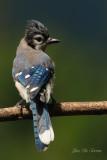 oiseaux_varies_birds_miscellaneous