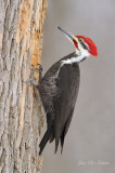 pics__woodpeckers