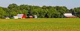 Farm, Manchester, TN
